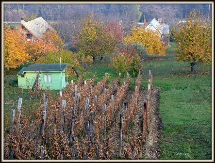 031 Egregyi szőlő.JPG