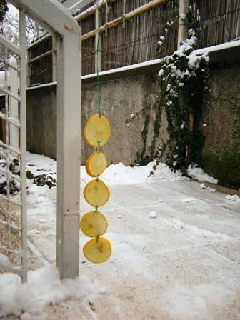 Egy feldarabolt citrom hónapokig riaszt.JPG