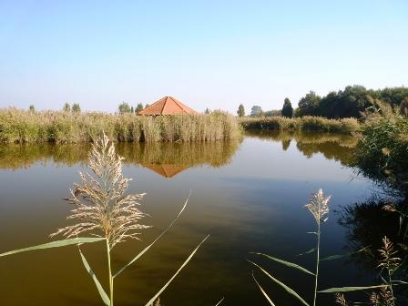 008 Szerény vizes élőhely.JPG