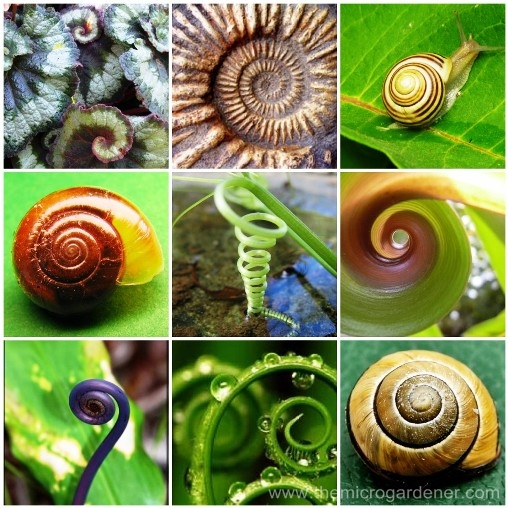 Spirals-inspired-by-nature_wm.jpg