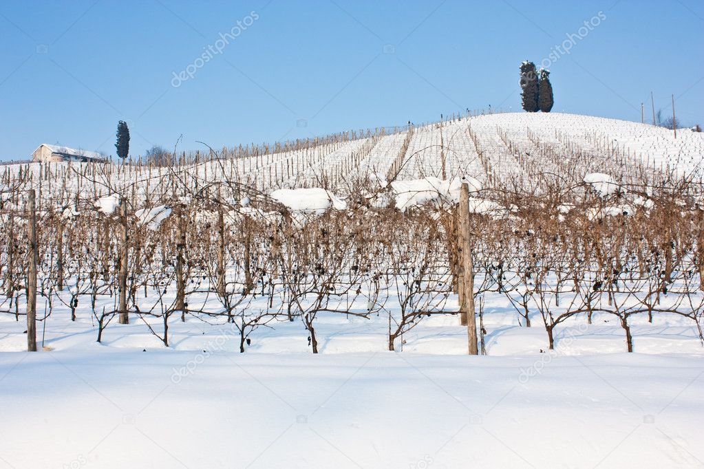 depositphotos_12135639-stock-photo-tuscany-wineyard-in-winter.jpg
