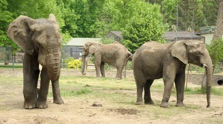 elefánt szex 313.jpg