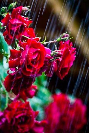 eső3.jpg
