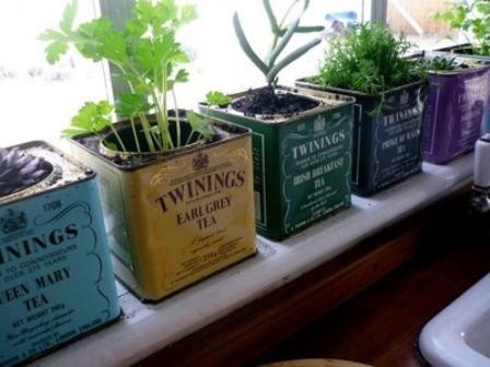 teásdobozok növény.jpg