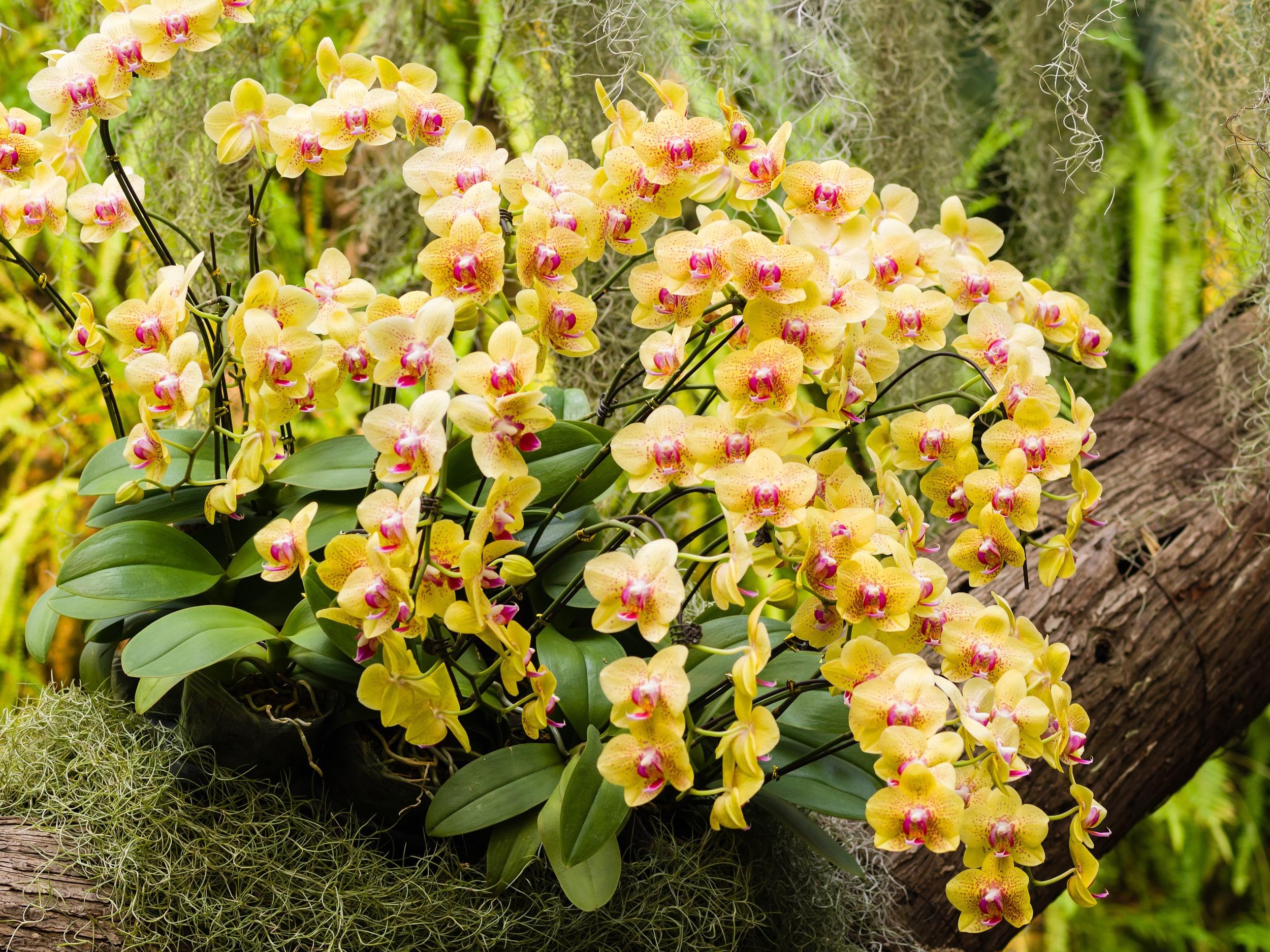 garden2017_orchidea5.jpg