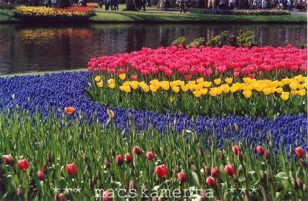 holland01b.jpg