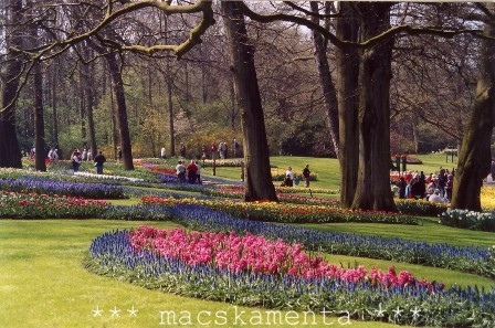 holland02b.jpg