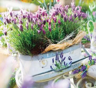 Provonce-Topf-Lavendel.jpg