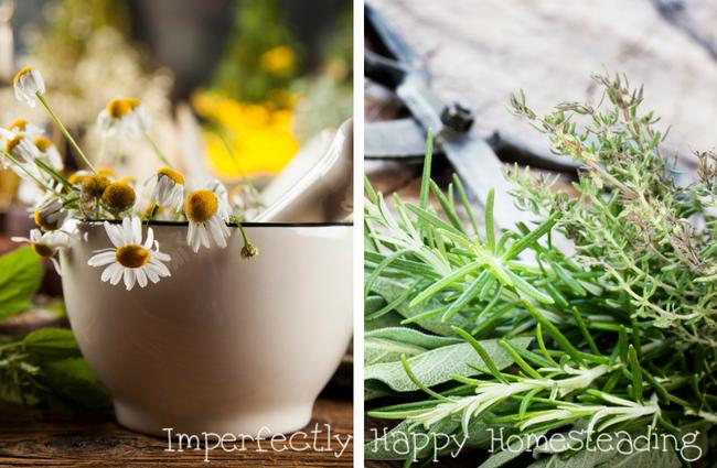 medicinal-herbs.png