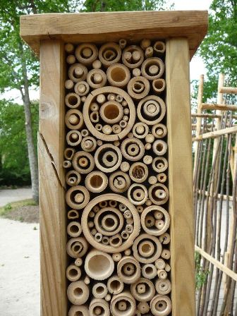 bambusz_1.jpg