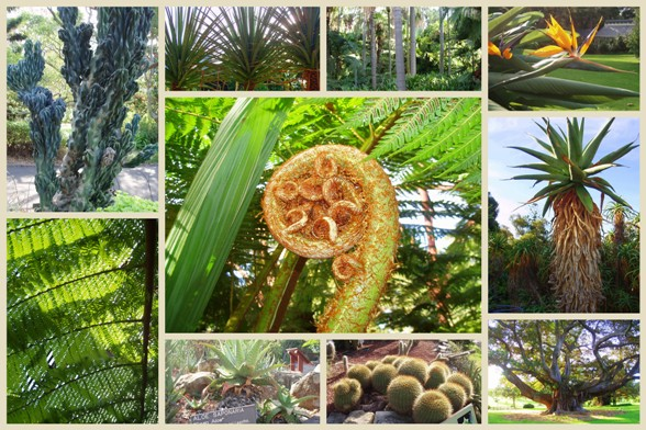 Sydney Botanic Garden1 másolata.jpg