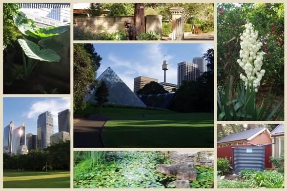 Sydney Botanic Garden4 másolata.jpg