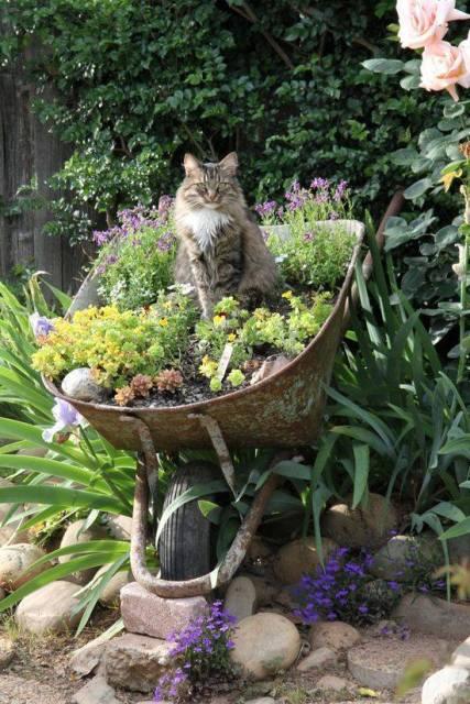 talicska cica.jpg