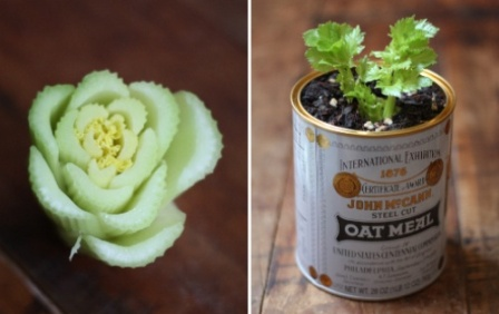 How to regrow celery from base roots.jpg