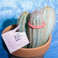 Kaktuszra óvszert: a taktikai szavazás lehetetlen küldetés?
