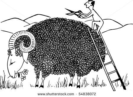 stock-vector-sheep-shearing-54838072.jpg