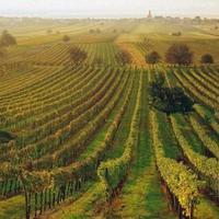 Ha Burgenland, akkor vörösbor és ruszti aszú