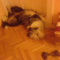(: A normális alvási pozíció...szerintem :)