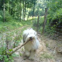 (: Kutya a rengetegben avagy várakozó álláspont :)
