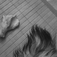 (: A hét műtárgyai: Alvó Kardigán csonttal, játékkal - részlet :)
