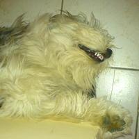 (: Kutya vicces ez az álom :)