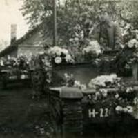 125. Az Ansaldo II. - Az Ansaldok Magyarországon