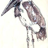 a marabu