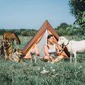 """Minden napom úgy telik, mintha nyaralnék!"" – interjú Hajnal Viviennel, a Hajnal tanya tulajdonosával"