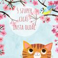 5+1 cicás Instagram oldal macskabolondoknak