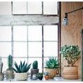 A kaktusz az új trend, dobd fel vele a lakást!