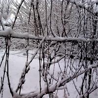 téli lugas őszi lugas