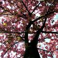 Tavaszváró képekben