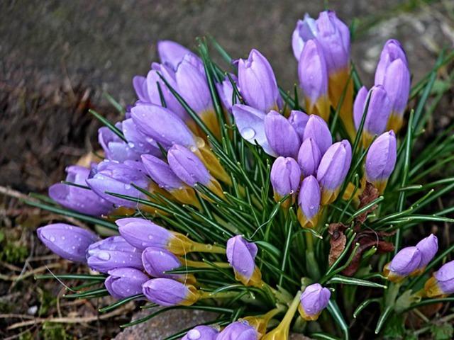 Hogyan vészeljük át a tavaszi fáradtságot?