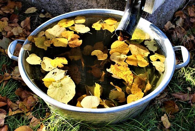 autumn-2939669_640.jpg