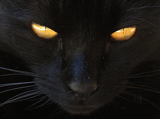 cat-2540940_640.jpg
