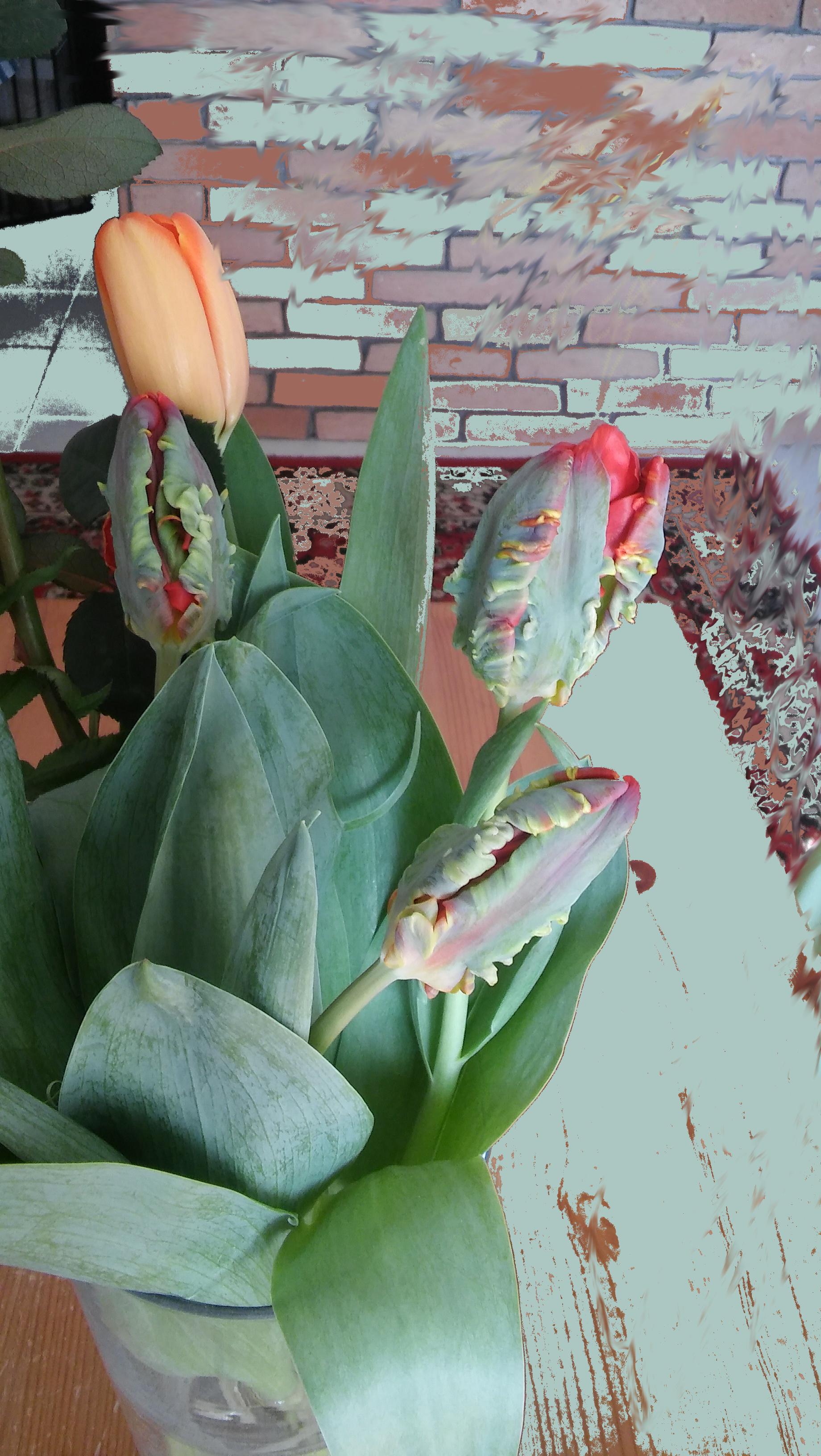 tulipa1_1.jpg