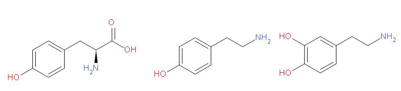 tirozin_tiamin_dopamin.png
