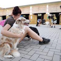 Agility, a kutyák olimpiája