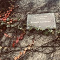 Dublini séták: az Iveagh Gardens