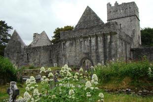 A Muckross Abbey