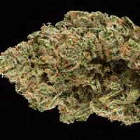 A világ legerősebb füve nyert az Amerikai Kannabisz Kupán