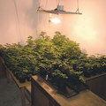 Hogyan lesz 130 növényből 260 kiló fű?
