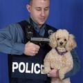 Lelőtték a polgármester kutyáit a kommandósok