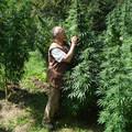 Csehország legalizálta az orvosi marihuánát