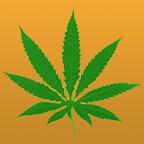 A marihuána halált okozhat