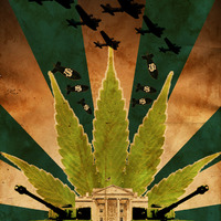 Hadsereggel és milliárdokkal egy növény ellen