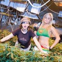 Mary és Juana ültetvénye