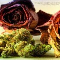 Buds n' Roses