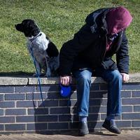 A kutyasétáltatás veszélye