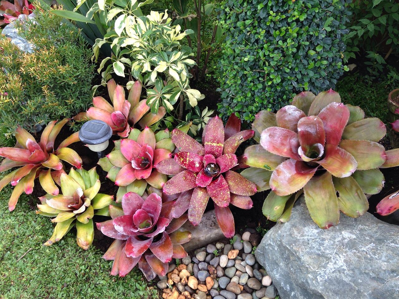bromeliads-781309_1280.jpg